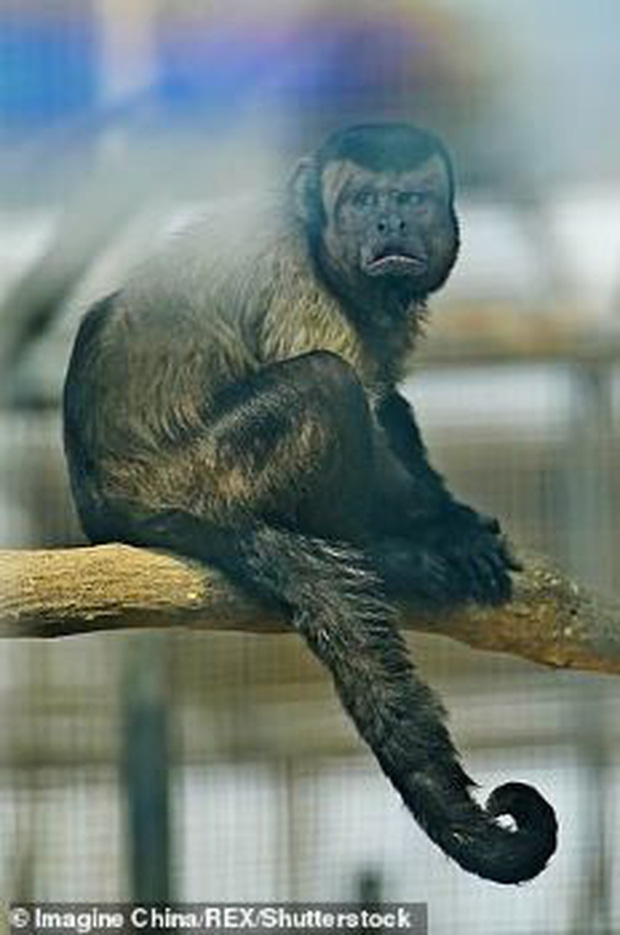 Chú khỉ có gương mặt giống hệt người đàn ông đau khổ gây sốt tại Trung Quốc-4