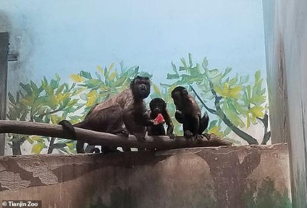 Chú khỉ có gương mặt giống hệt người đàn ông đau khổ gây sốt tại Trung Quốc-5