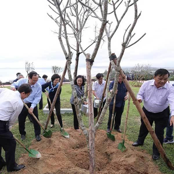 Thêm 110 nghìn cây 'phủ xanh' tỉnh Bình Định-1