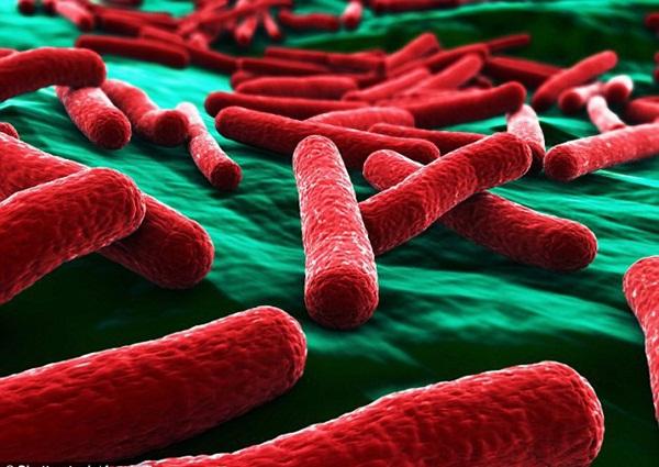 Kinh hãi: Vi khuẩn kháng kháng sinh được tìm thấy trong hầu hết những túi đồ trang điểm của phái đẹp-2