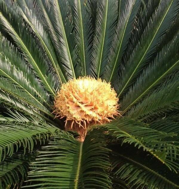 Tuổi Mùi hợp cây gì trồng trong nhà sẽ hút nhiều tài lộc, may mắn cho gia chủ?-1