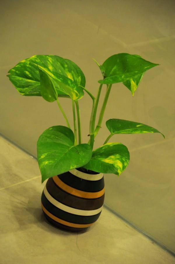 Tuổi Mùi hợp cây gì trồng trong nhà sẽ hút nhiều tài lộc, may mắn cho gia chủ?-3