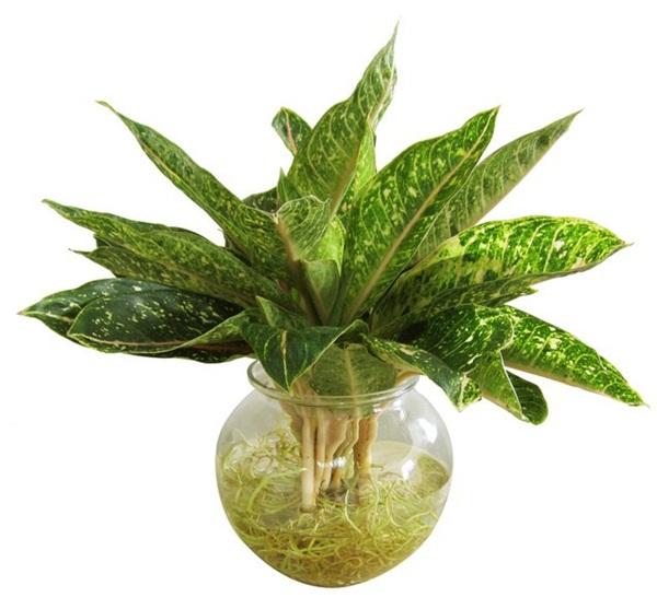 Tuổi Mùi hợp cây gì trồng trong nhà sẽ hút nhiều tài lộc, may mắn cho gia chủ?-5