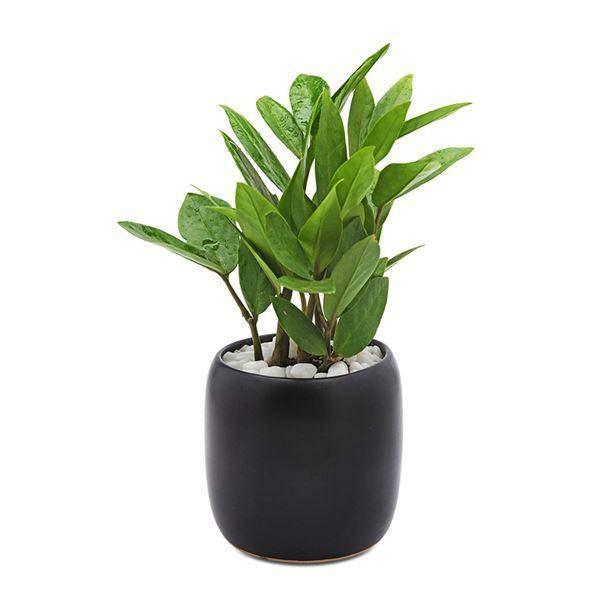 Tuổi Mùi hợp cây gì trồng trong nhà sẽ hút nhiều tài lộc, may mắn cho gia chủ?-7