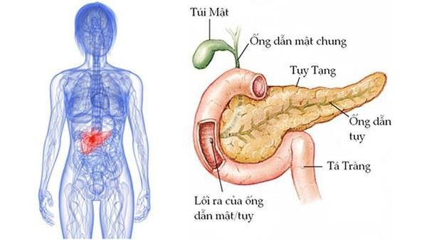 Bộ phận này càng to, báo hiệu lá gan, tuyến tụy đang dần suy kiệt-2