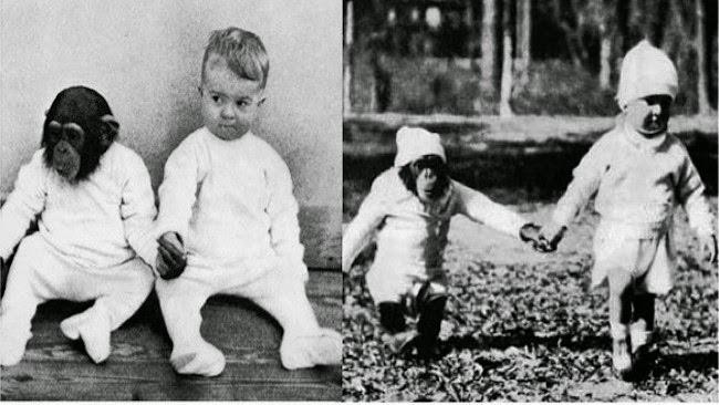 Cho con trai và tinh tinh ăn ngủ cùng nhau để phục vụ thí nghiệm, nhà khoa học vội chấm dứt mọi thứ sau 9 tháng khi phát hiện ra sự thật kinh hoàng-2