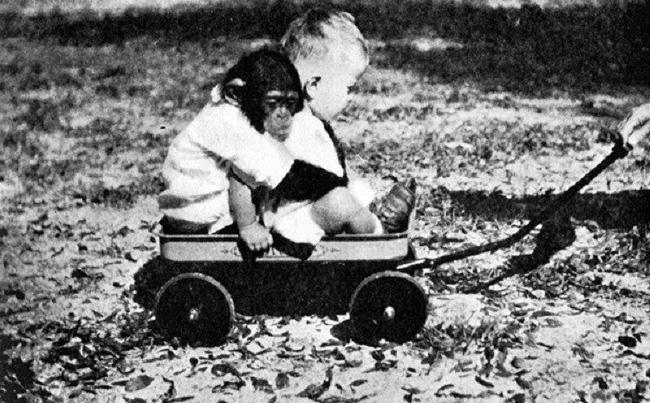 Cho con trai và tinh tinh ăn ngủ cùng nhau để phục vụ thí nghiệm, nhà khoa học vội chấm dứt mọi thứ sau 9 tháng khi phát hiện ra sự thật kinh hoàng-5