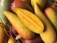 Tận mục quả xoài nhìn xa ngỡ trái ớt, hạt nhỏ như que tăm gây 'sốt'