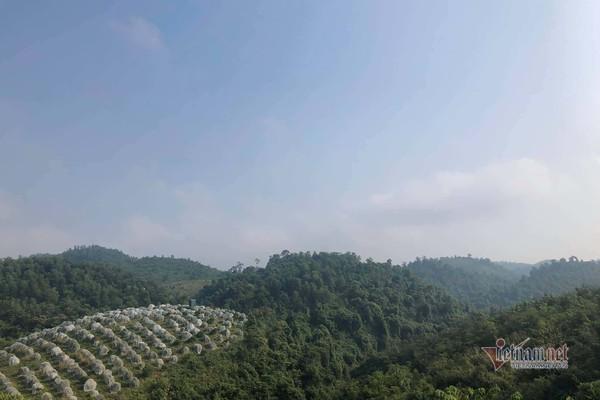 Đồi cam 6 tỷ kỳ lạ nhất Việt Nam, 2.000 cây mắc màn trắng cả rừng-1
