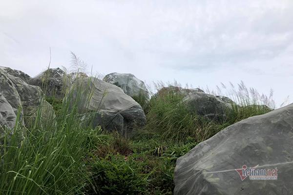 Đồi cam 6 tỷ kỳ lạ nhất Việt Nam, 2.000 cây mắc màn trắng cả rừng-12