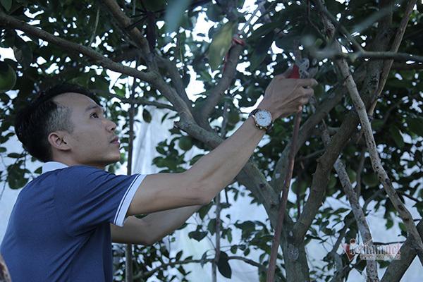 Đồi cam 6 tỷ kỳ lạ nhất Việt Nam, 2.000 cây mắc màn trắng cả rừng-9