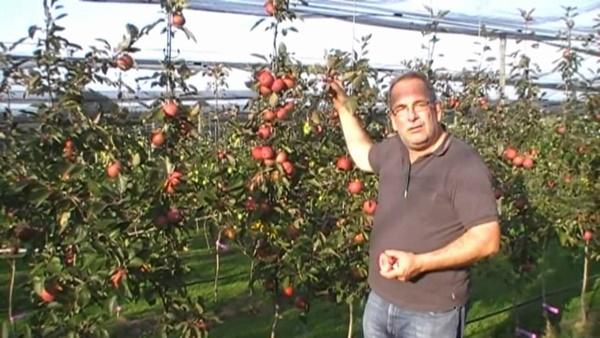 Chị em phấn khích với giống táo vỏ đỏ, ruột cũng đỏ mà lại không phải là quả biến đổi gen-3