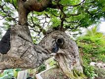 Cặp đôi siêu cây cảnh me - tường vi 'ế chỏng chơ' sau nhiều năm hét giá gần 5 tỷ