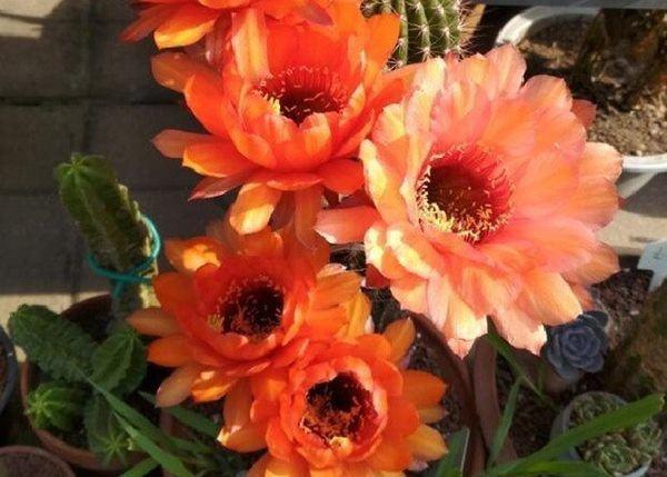 Trồng hoa cho thêm 1 viên thuốc này vào, cây tươi rói, tốt hơn cả phân bón-1