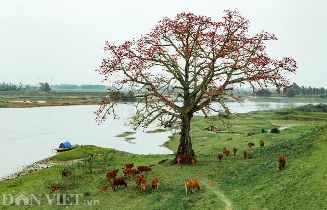 Những hình ảnh tuyệt đẹp về phong cảnh, thiên nhiên Việt Nam-9