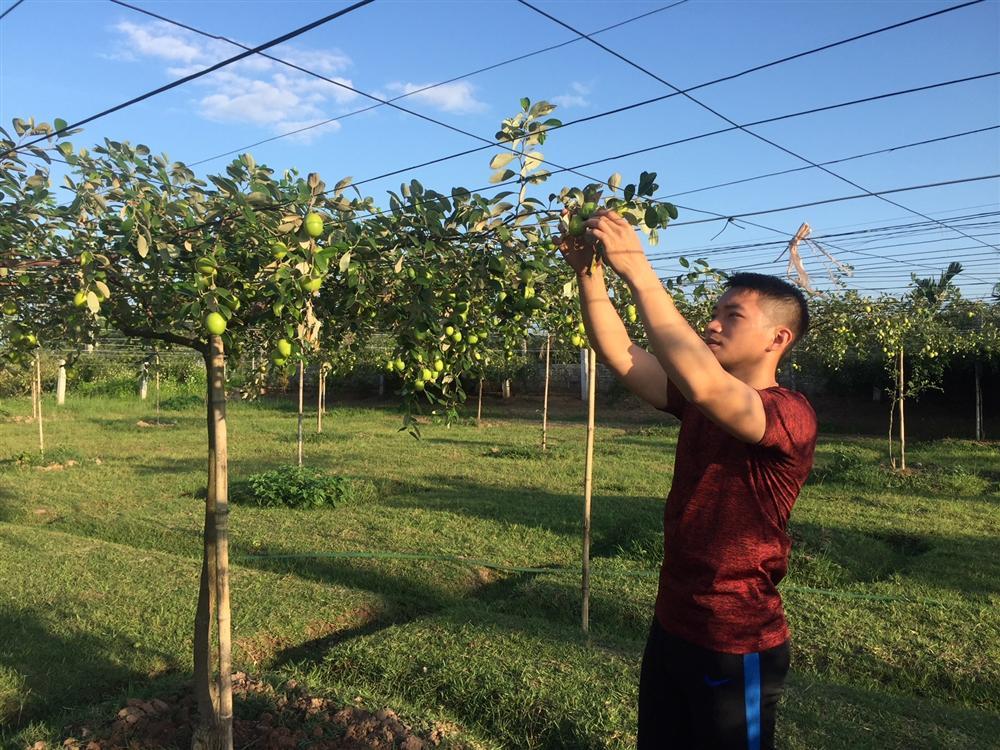 Biến cây táo dại đầy gai thành đặc sản thu 60 tỷ mỗi năm-1