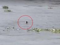 Nhảy từ cầu Sài Gòn xuống sông tự tử, nam thanh niên tự bơi rồi chới với kêu cứu