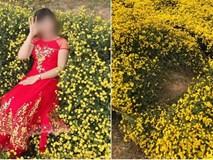 Hình ảnh cô gái nằm ngả ngớn thẳng luống hoa cúc để chụp ảnh khiến dân mạng