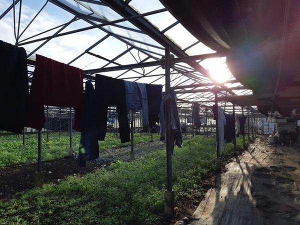 Phát hiện 5 người Việt sống như nô lệ trong hoàn cảnh khổ sở, tù túng tại một vườn ươm cây ở nước Anh-4