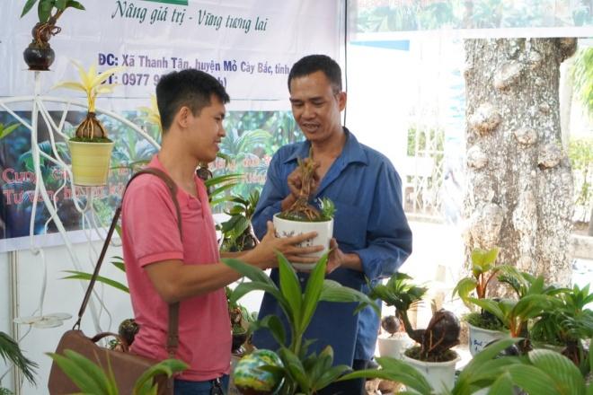 Xuất hiện dừa bonsai đột biến 2 màu cực lạ, hàng độc chơi Tết-5