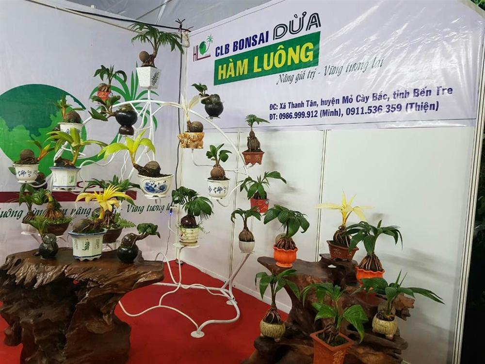 Xuất hiện dừa bonsai đột biến 2 màu cực lạ, hàng độc chơi Tết-6