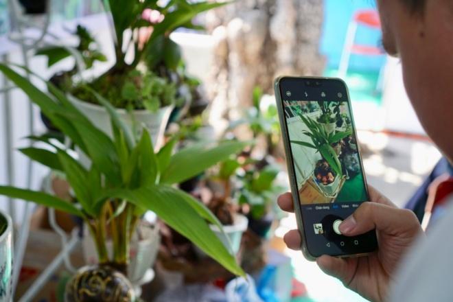 Xuất hiện dừa bonsai đột biến 2 màu cực lạ, hàng độc chơi Tết-9