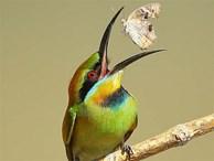 Ngỡ ngàng khoảnh khắc 'chộp bướm' và loạt ảnh cực đẹp về loài chim