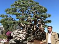 Đồng Nai: Cây me 'khủng' 60 năm tuổi đã kết trái vẫn còn ra hoa