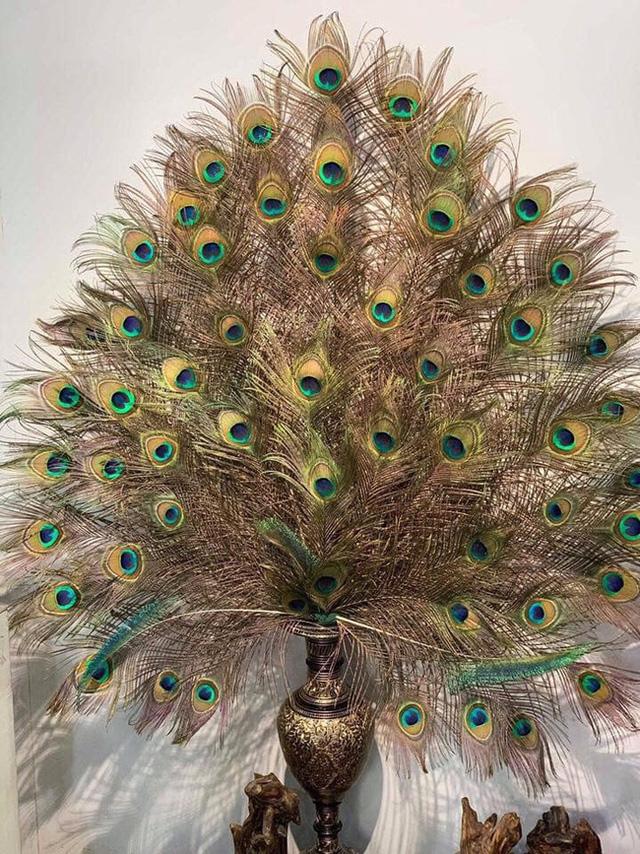 Những ngày sát Tết, lông công phong thủy bỗng trở thành trào lưu mua sắm mới được nhiều người săn tìm-4