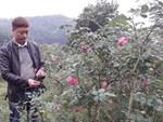 Vườn hồng 400 loài đẹp ngẩn ngơ của kỹ sư bỏ phố về núi-7