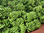 Bỏ 25 triệu đồng mua cả vườn chuối, tiểu thương thắng đậm gấp đôi khi bán 10 ngày Tết-6