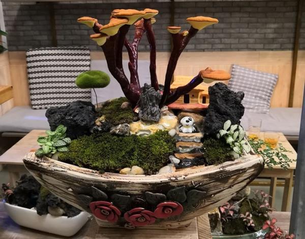 Giá đắt đỏ tiền triệu, nấm linh chi bonsai vẫn hút khách-2