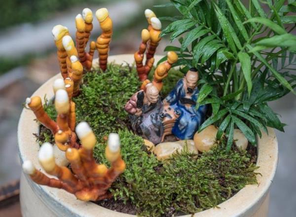 Giá đắt đỏ tiền triệu, nấm linh chi bonsai vẫn hút khách-7