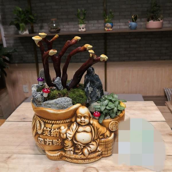 Giá đắt đỏ tiền triệu, nấm linh chi bonsai vẫn hút khách-8