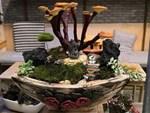 Đu đủ bonsai giá đắt trên trời có gì độc đáo, hút khách mua chơi Tết?-12