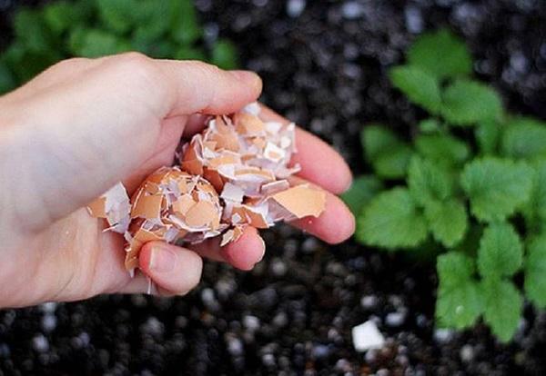 Vỏ chuối, bã đậu đừng vứt đi, để làmphân bón cựcthần thánh-4