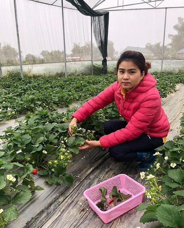 Nữ Thạc sĩ 9X người Tày trồng hoa hồng thu 2 tỷ đồng/năm-2