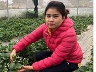 Nữ Thạc sĩ 9X người Tày trồng hoa hồng thu 2 tỷ đồng/năm