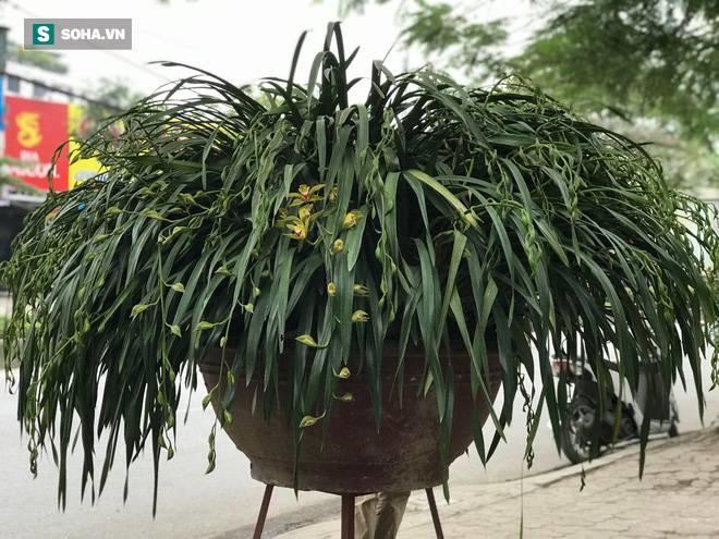 Hơn 300 triệu 1 chậu hoa lan Trần Mộng, đại gia có tiền cũng không mua được vì cháy hàng-1