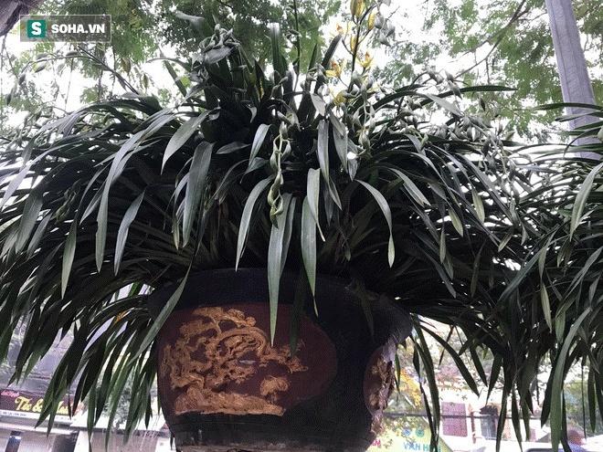 Hơn 300 triệu 1 chậu hoa lan Trần Mộng, đại gia có tiền cũng không mua được vì cháy hàng-5