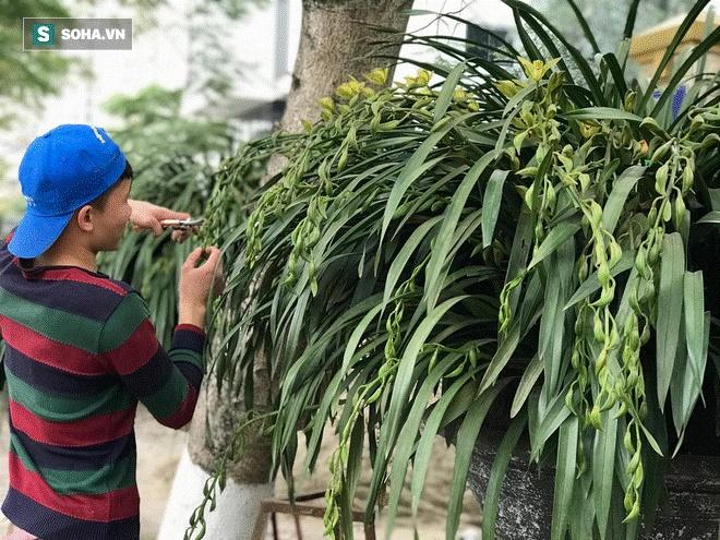 Hơn 300 triệu 1 chậu hoa lan Trần Mộng, đại gia có tiền cũng không mua được vì cháy hàng-9