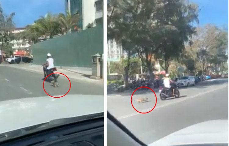 Xuất hiện clip người đàn ông kéo lê chú chó hàng trăm mét, con vật nhỏ bê bết máu trên đường khiến nhiều người phẫn nộ-2