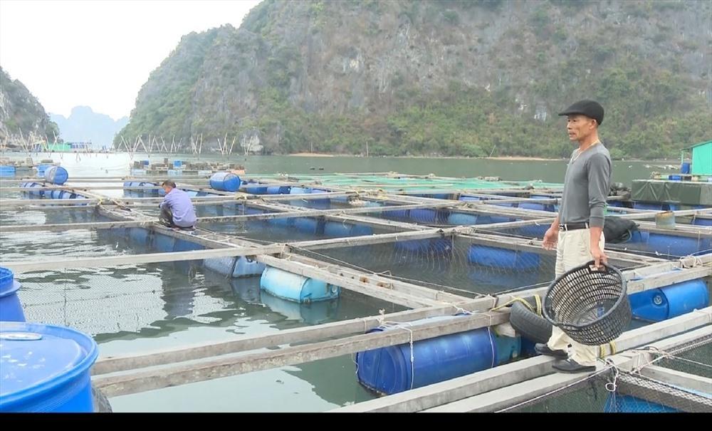 Chuyện về chú cá song kỳ lạ rất thích được đánh răng ở Quảng Ninh-3