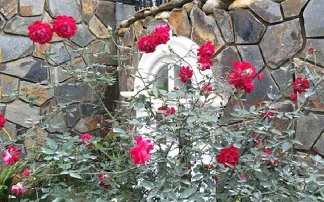 """Nhà vườn hoành tráng 4 mùa rợp bóng cây xanh của Nam Tào"""" Xuân Bắc-12"""