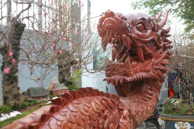 Ngắm chậu đào khủng Long quyện ngũ hành sơn giá bạc tỷ trên phố Hà Nội-3