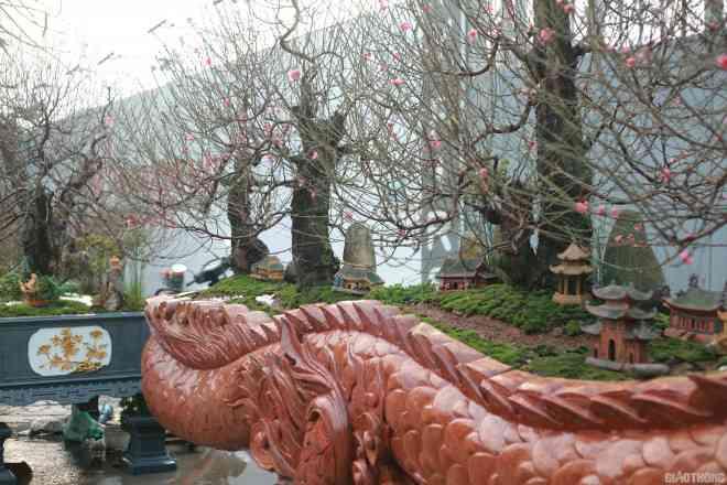 Ngắm chậu đào khủng Long quyện ngũ hành sơn giá bạc tỷ trên phố Hà Nội-4