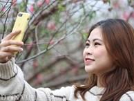 Giới trẻ Hà Nội rủ nhau check-in, chụp ảnh bên hoa đào ngày giáp Tết