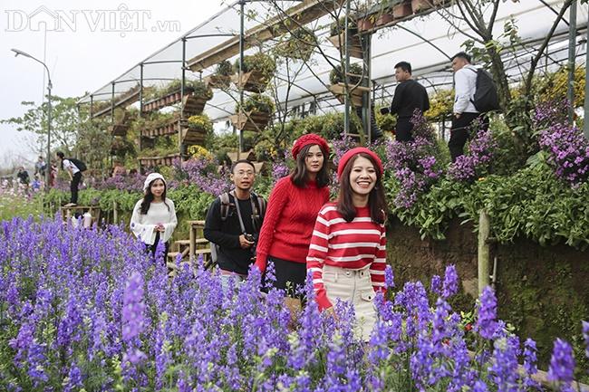 Giới trẻ Hà Nội rủ nhau check-in, chụp ảnh bên hoa đào ngày giáp Tết-1