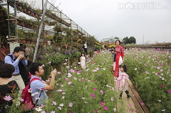 Giới trẻ Hà Nội rủ nhau check-in, chụp ảnh bên hoa đào ngày giáp Tết-7