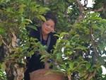 Cánh đồng dâu tằm chín mọng nổi nhất Hà Nội năm nay-10